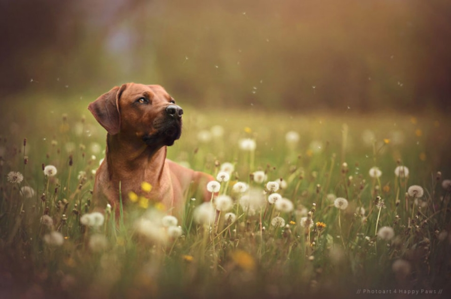 Woman-Creates-Enchanting-Portraits-of-Dogs-in-the-Austrian-Wilderness__18