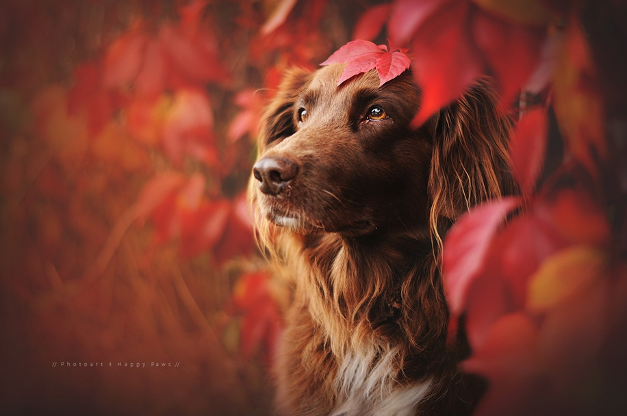 Woman-Creates-Enchanting-Portraits-of-Dogs-in-the-Austrian-Wilderness__2
