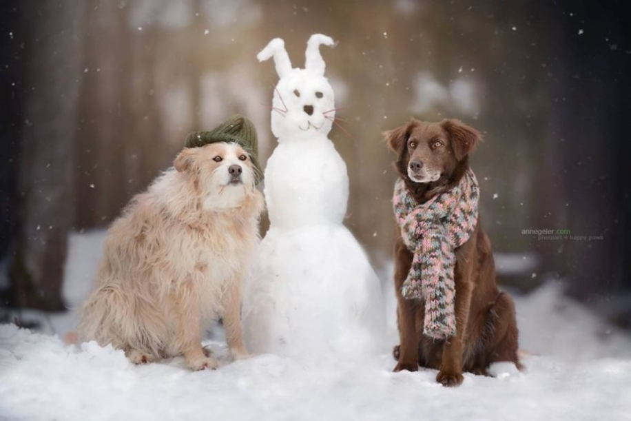 Woman-Creates-Enchanting-Portraits-of-Dogs-in-the-Austrian-Wilderness__22