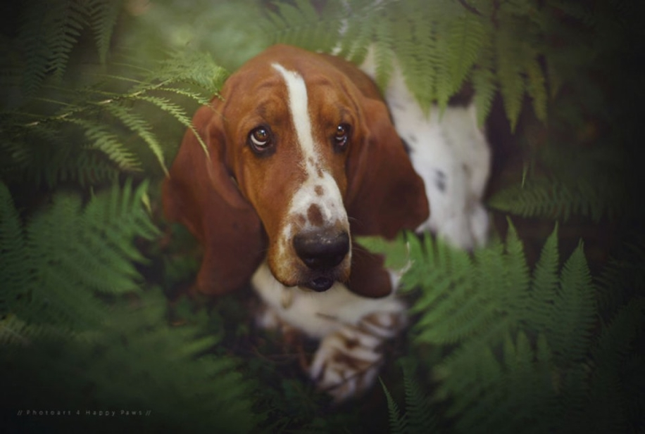 Woman-Creates-Enchanting-Portraits-of-Dogs-in-the-Austrian-Wilderness__27