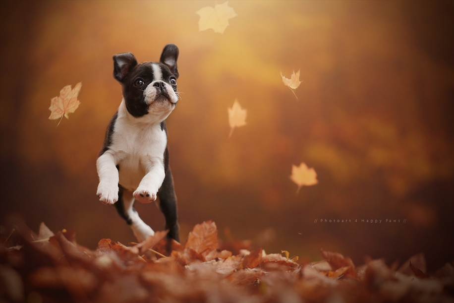 Woman-Creates-Enchanting-Portraits-of-Dogs-in-the-Austrian-Wilderness__3