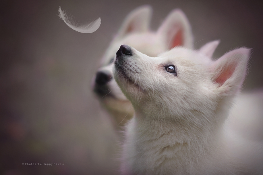 Woman-Creates-Enchanting-Portraits-of-Dogs-in-the-Austrian-Wilderness__4