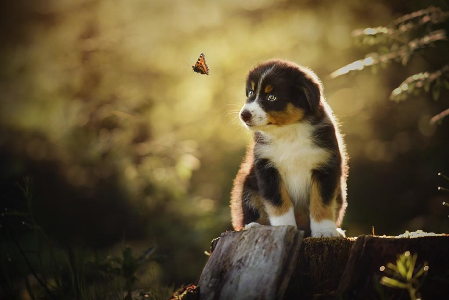Woman-Creates-Enchanting-Portraits-of-Dogs-in-the-Austrian-Wilderness__5