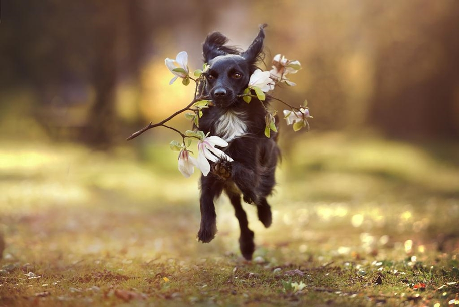 Woman-Creates-Enchanting-Portraits-of-Dogs-in-the-Austrian-Wilderness__8