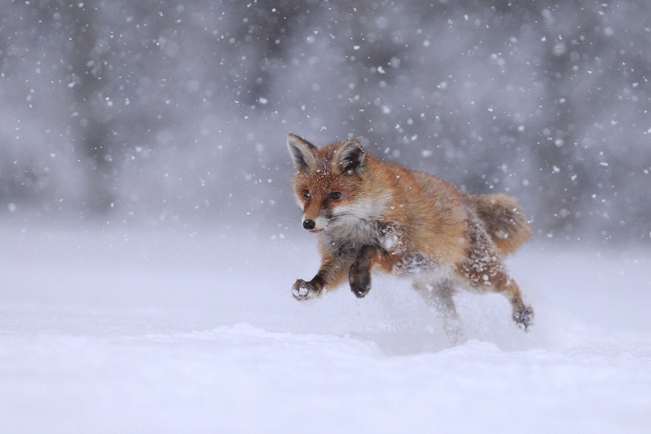 20 beautiful photos of wildlife 21