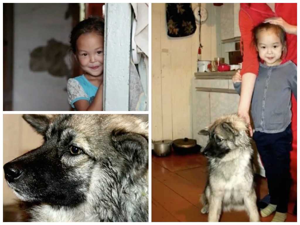 3-year-old girl lost in the woods, 11 days helped her to survive her faithful friend 01