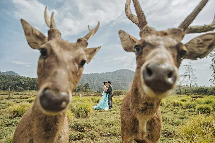 80 of the best wedding photos the world for 2015_07
