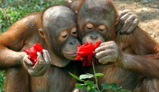 Очаровательные фотографии животных, которые нюхают цветы