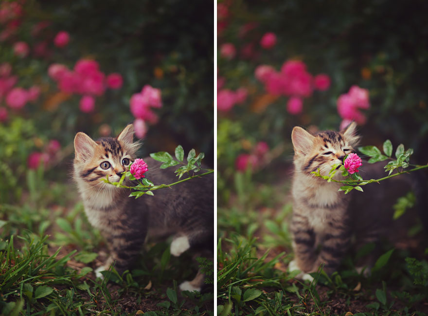 Adorable photos of animals who sniff flowers 01