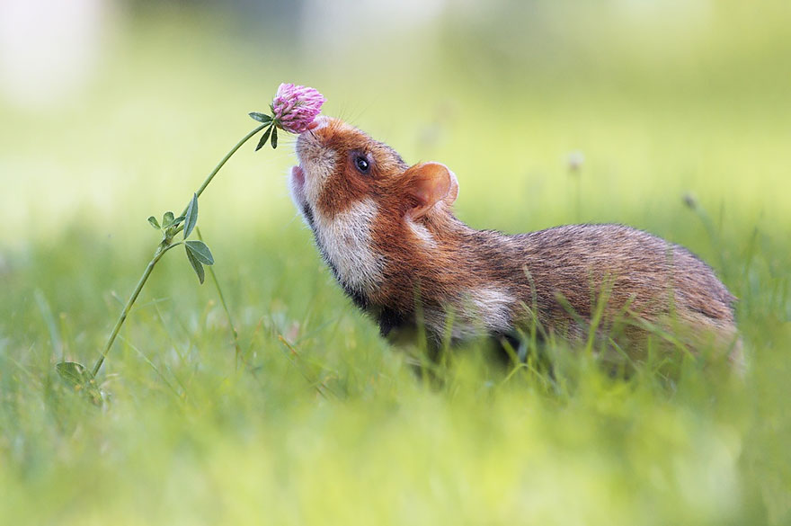 Adorable photos of animals who sniff flowers 02