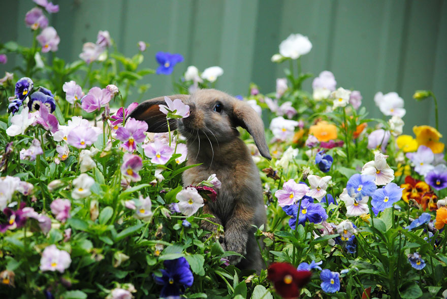 Adorable photos of animals who sniff flowers 04
