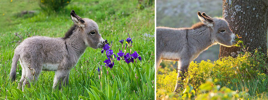 Adorable photos of animals who sniff flowers 06