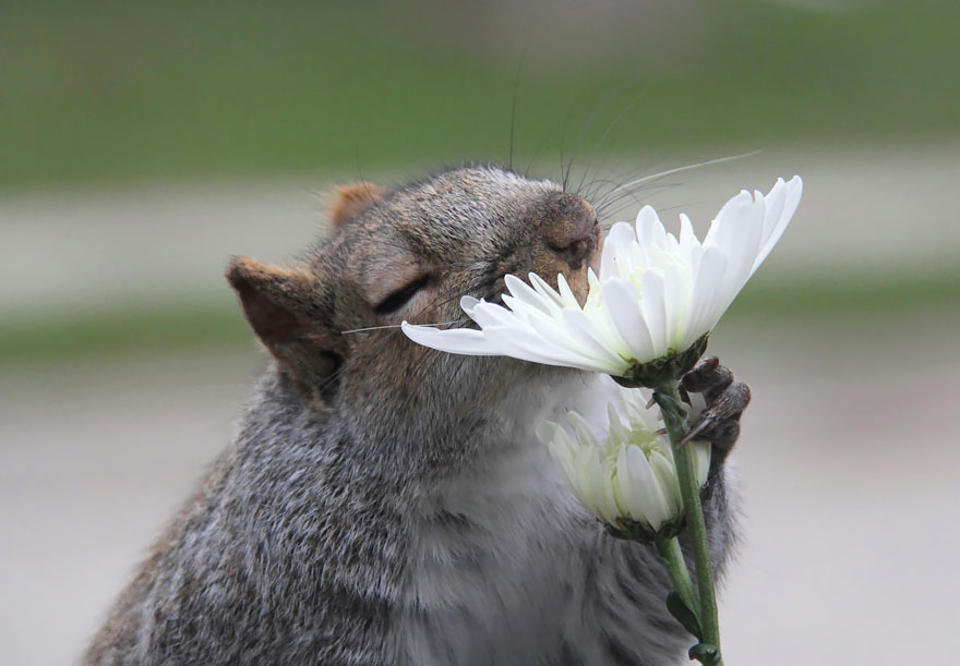 Adorable photos of animals who sniff flowers 08