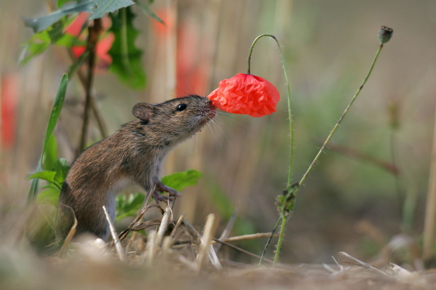 Adorable photos of animals who sniff flowers 12