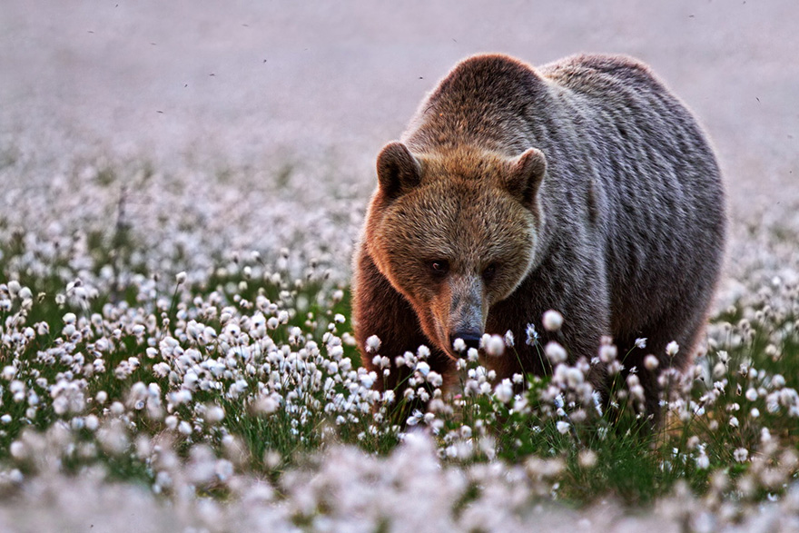 Adorable photos of animals who sniff flowers 14