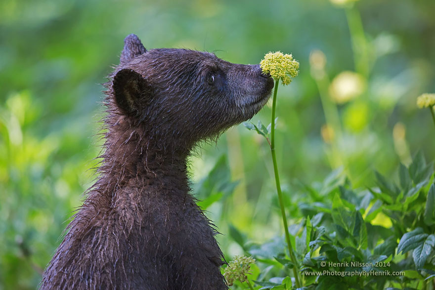 Adorable photos of animals who sniff flowers 15