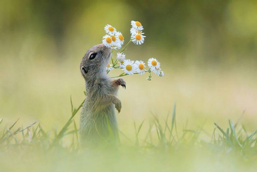 Adorable photos of animals who sniff flowers 16