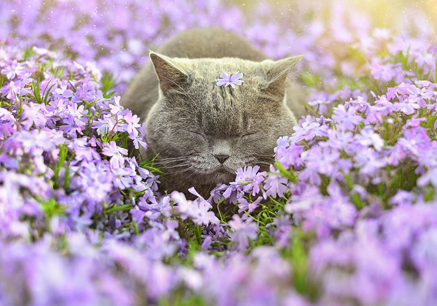 Adorable photos of animals who sniff flowers 17