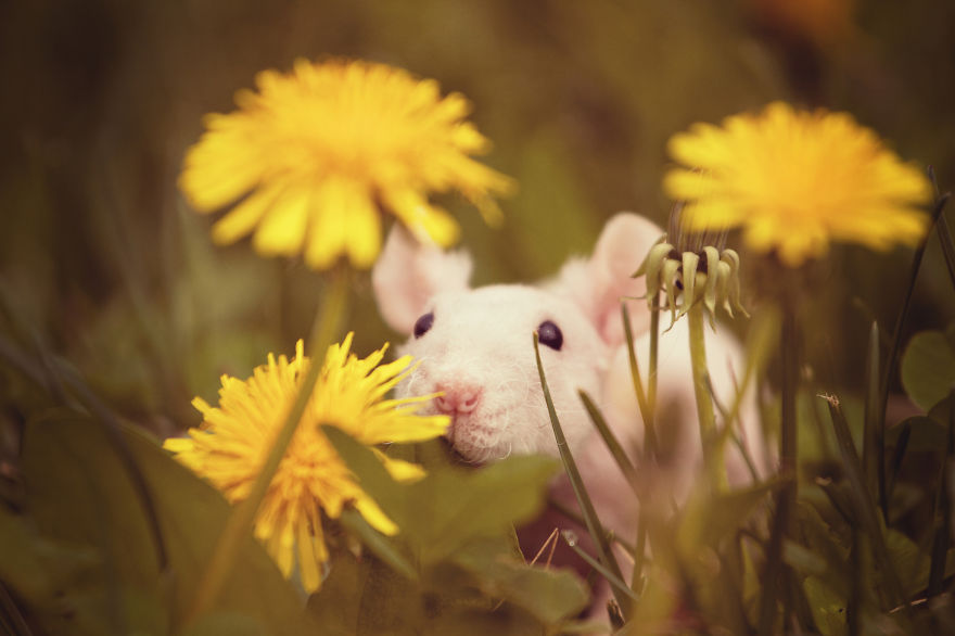 Adorable photos of animals who sniff flowers 19