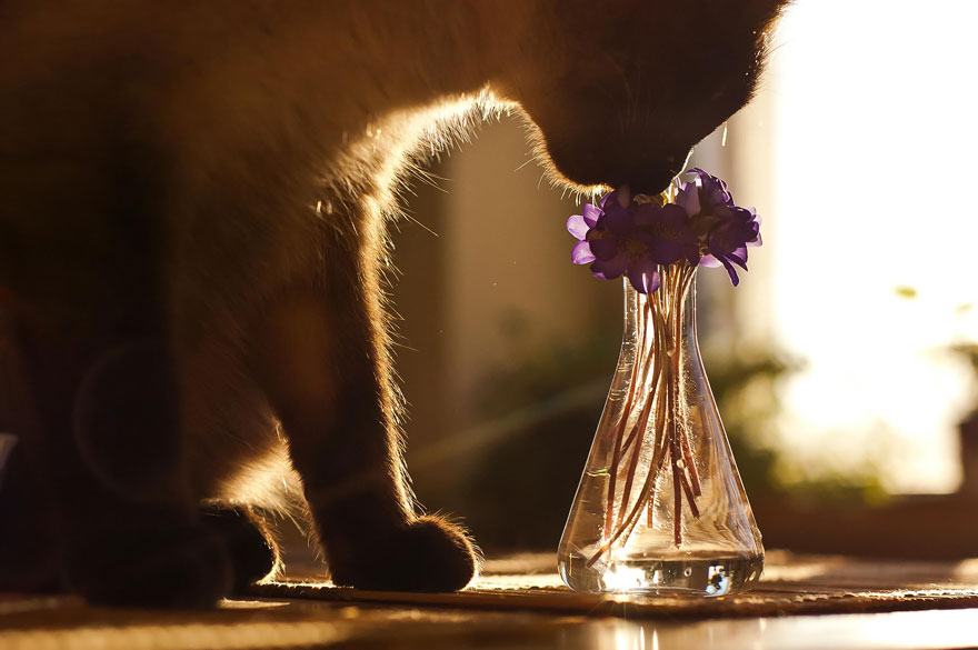 Adorable photos of animals who sniff flowers 20