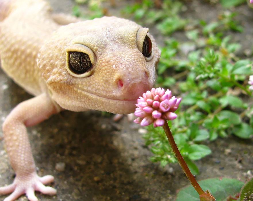 Adorable photos of animals who sniff flowers 21