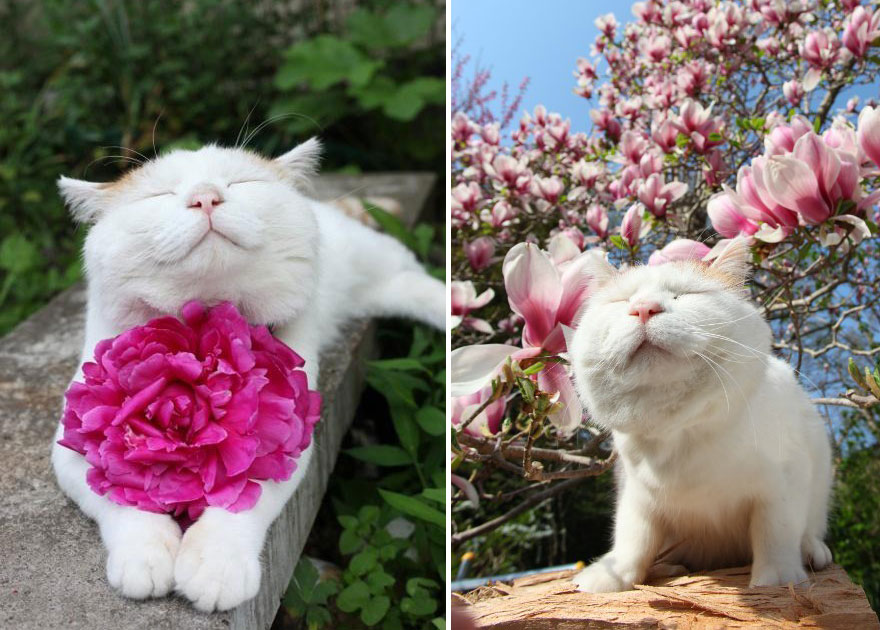 Adorable photos of animals who sniff flowers 23
