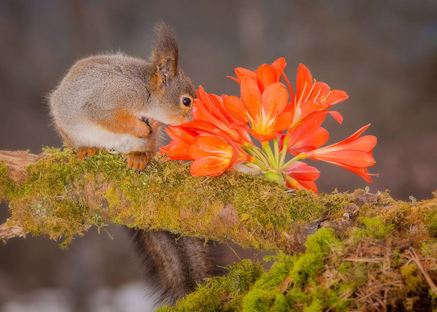 Adorable photos of animals who sniff flowers 24
