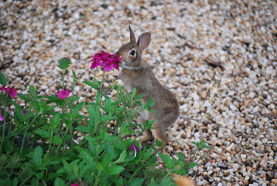 Adorable photos of animals who sniff flowers 25
