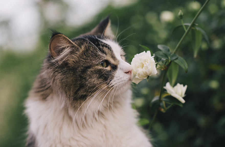 Adorable photos of animals who sniff flowers 26