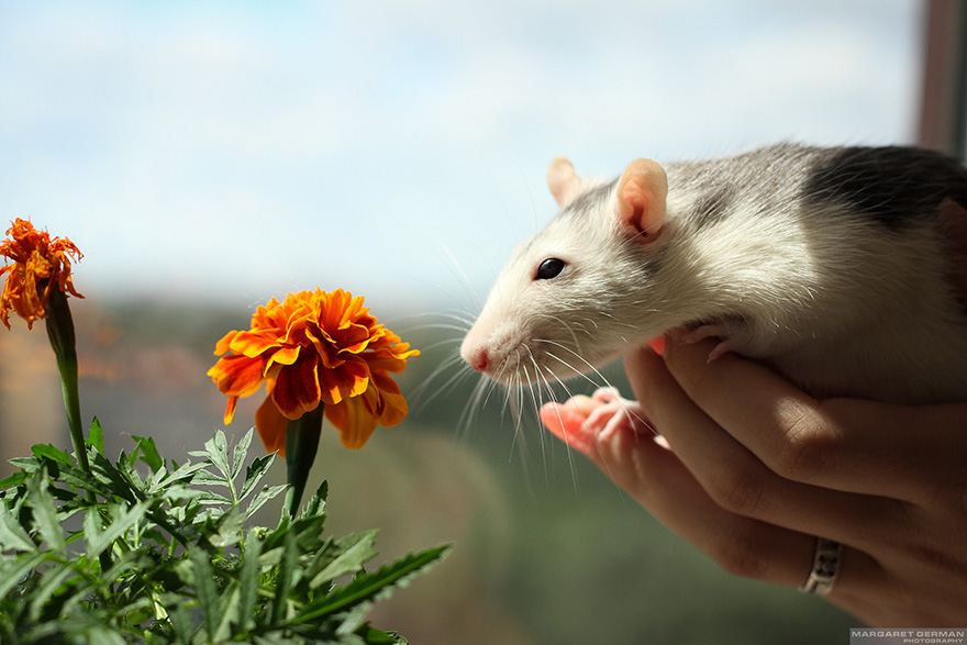 Adorable photos of animals who sniff flowers 29