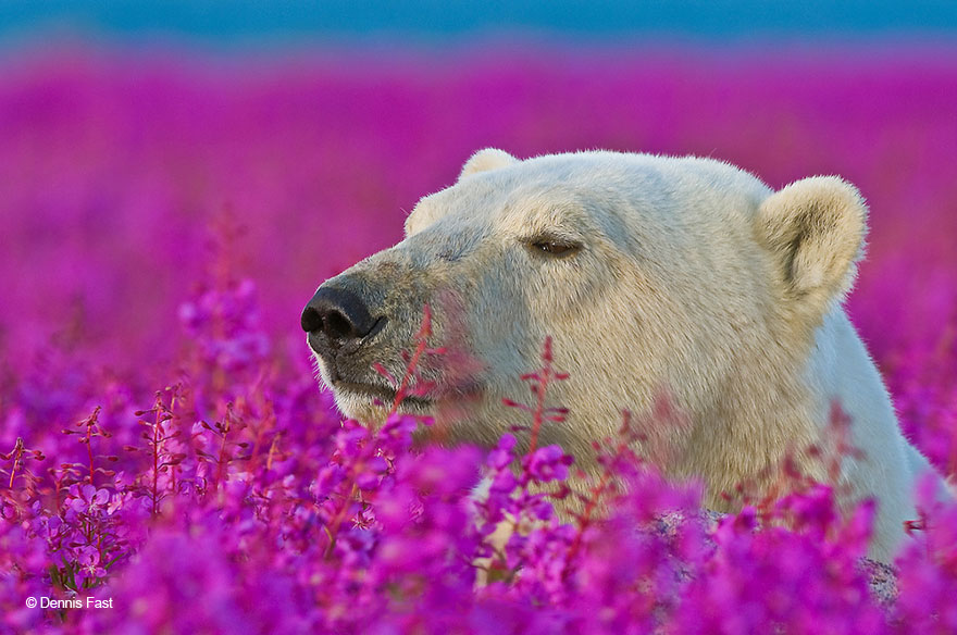 Adorable photos of animals who sniff flowers 30