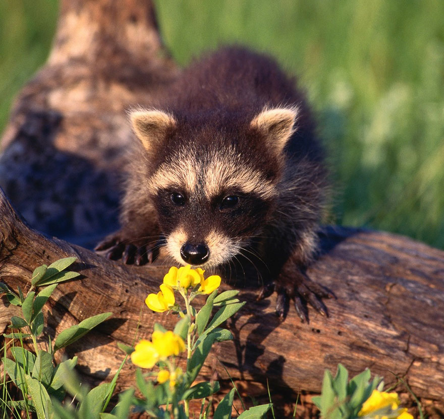 Adorable photos of animals who sniff flowers 31