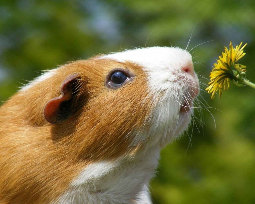 Adorable photos of animals who sniff flowers 32