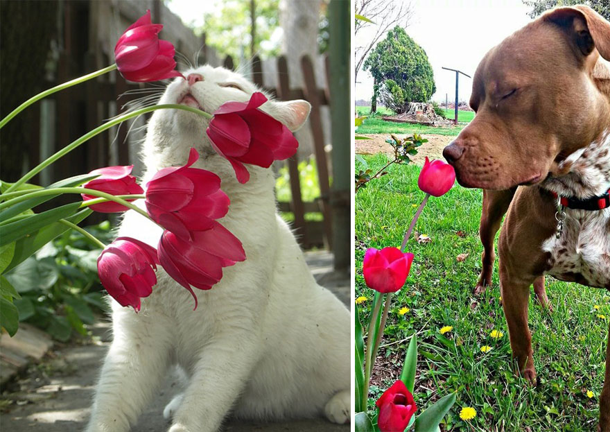 Adorable photos of animals who sniff flowers 35