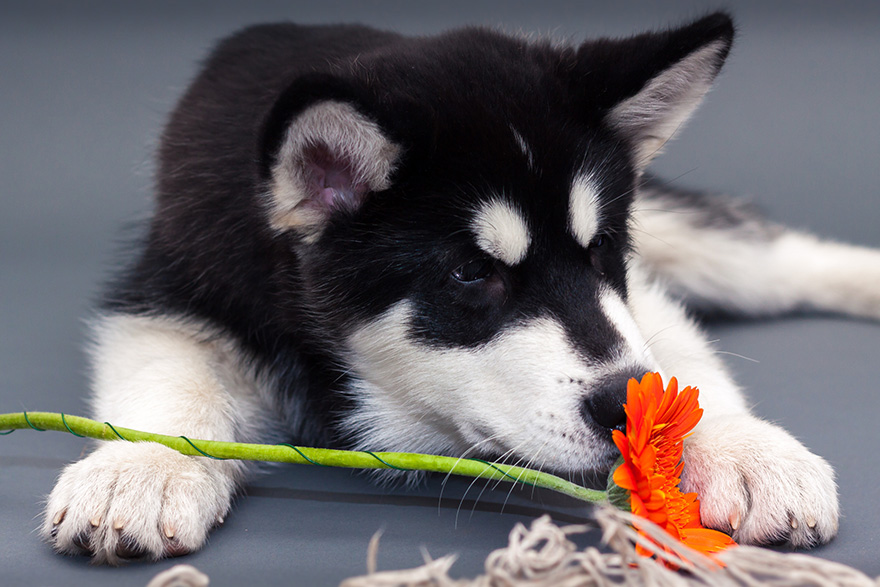 Adorable photos of animals who sniff flowers 37