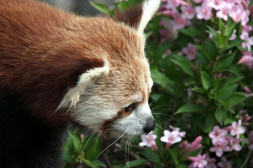 Adorable photos of animals who sniff flowers 39