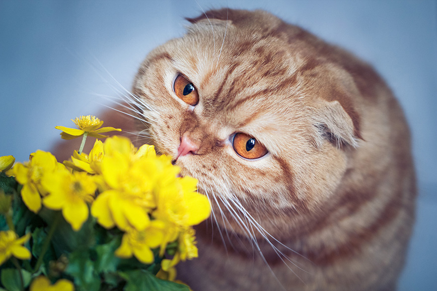 Adorable photos of animals who sniff flowers 40