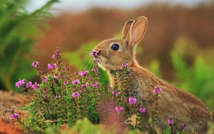 Adorable photos of animals who sniff flowers 43