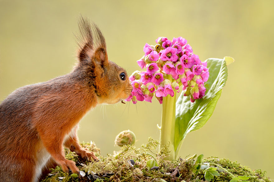 Adorable photos of animals who sniff flowers 48