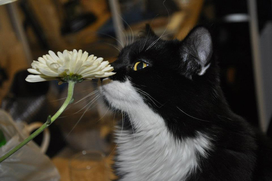 Adorable photos of animals who sniff flowers 49