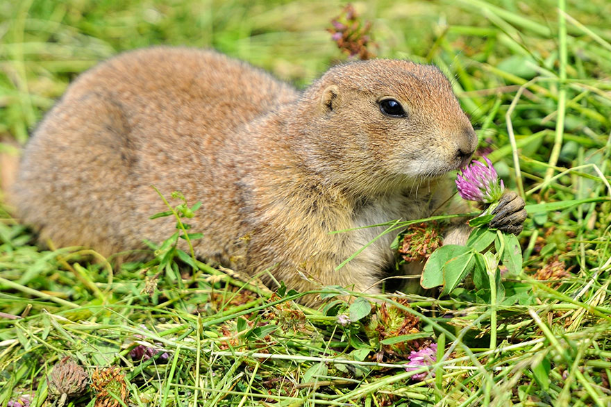 Adorable photos of animals who sniff flowers 52