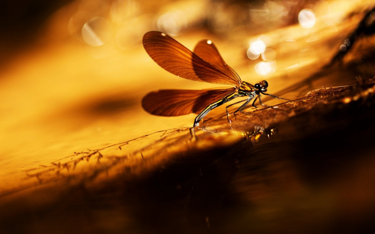 Beautiful macrophotography 03