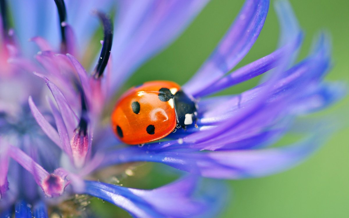 Beautiful macrophotography 20
