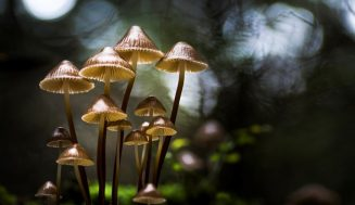 Красивые фотографии грибов Филипа Еремита