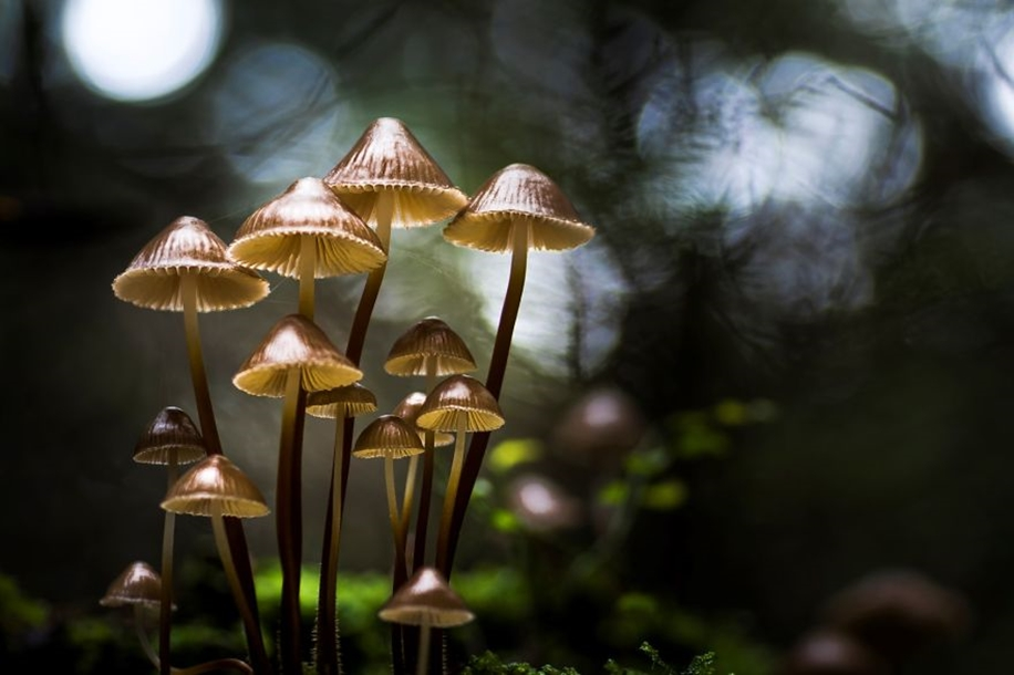 Beautiful pictures of mushrooms 01