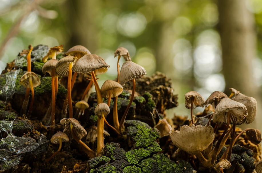 Beautiful pictures of mushrooms 03