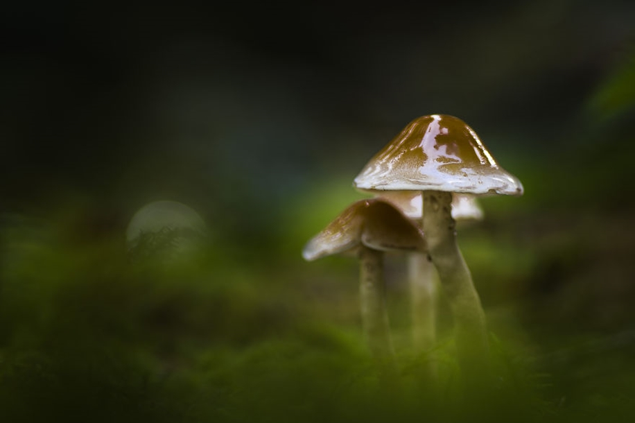 Beautiful pictures of mushrooms 04
