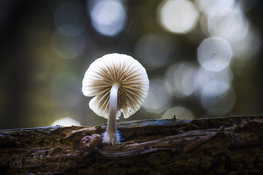 Beautiful pictures of mushrooms 05