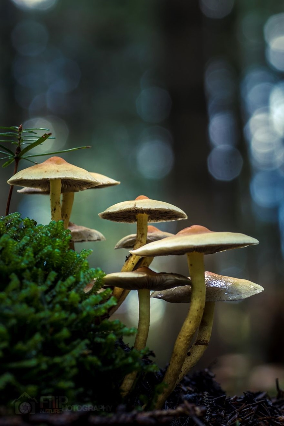 Beautiful pictures of mushrooms 12