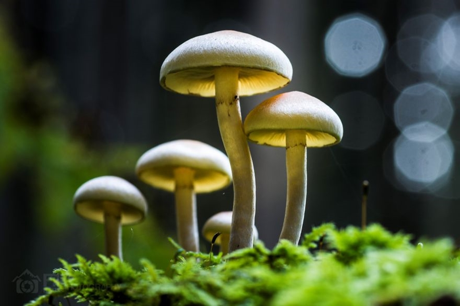 Beautiful pictures of mushrooms 14